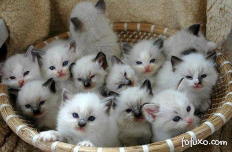 Dicas para cuidar de gatos recém-nascidos sem a mãe por perto
