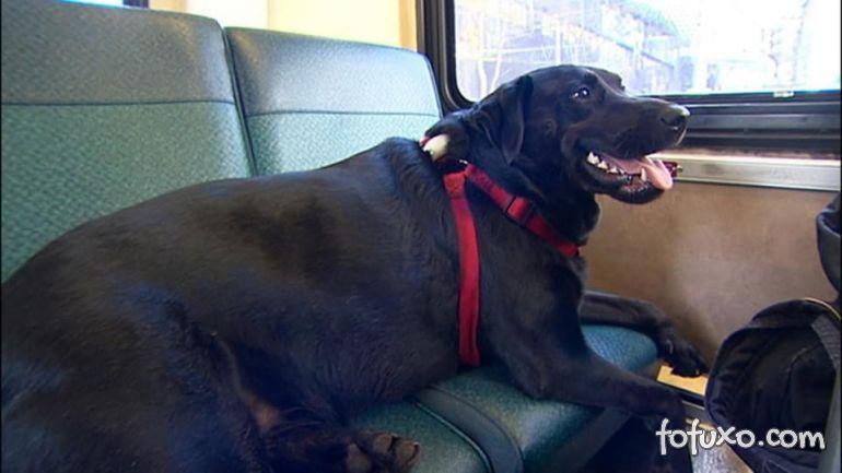 Cachorro pega ônibus para ir até parque sozinho