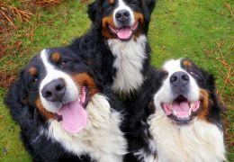 Empresa do ramo alimentício promove pesquisa sobre felicidade dos cães