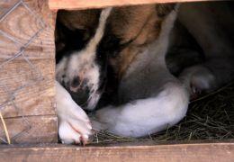 Como diagnosticar cães senis