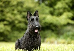 Pesquisadores trabalham na criação de contraceptivo para cães e gatos