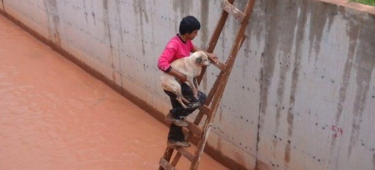 Cachorro é resgatado de drenagem por jovem