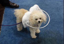 Acessório ajuda cães com deficiência visual
