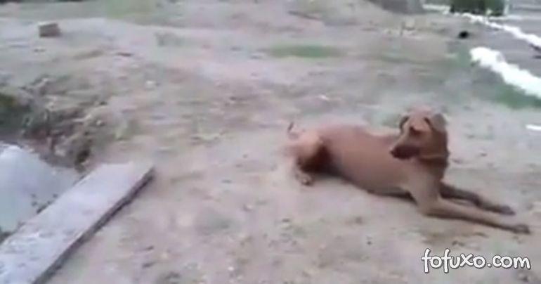 Cachorro corre para ajudar dono que finge estar se afogando