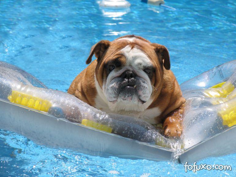 Todos os cães sabem nadar?