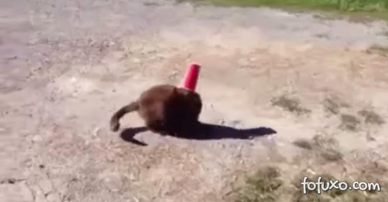 Cachorro salva gato com copo na cabeça