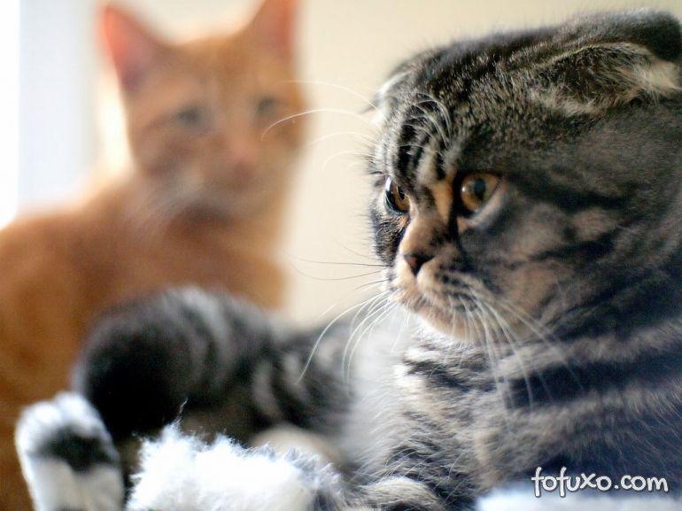 Dicas para cruzar gatos