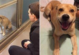 Confira imagens do antes e depois dos cães tirados das ruas