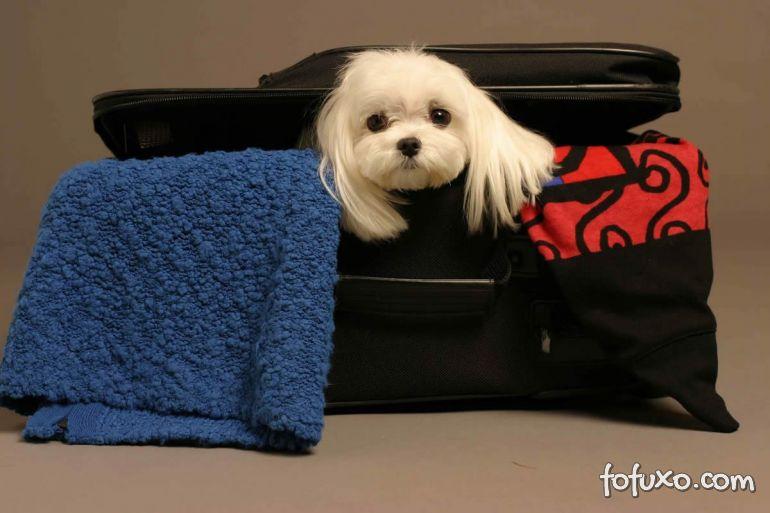 Dicas para viajar com o seu Pet no avião