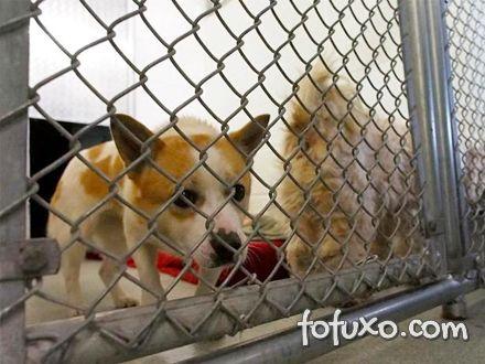 Organização humanitária solta cães que seriam transformados em alimento