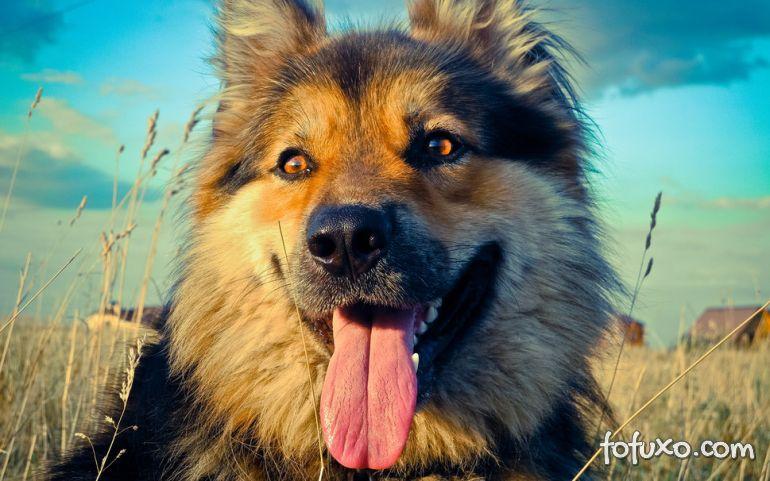 Cachorro vs Raiz: Quem será o vencedor?