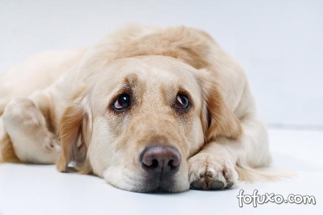 Será que esse cachorro realmente está chorando lágrimas?