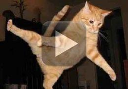 Confira este gato lutando MMA com um bebê
