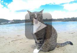 Confira o incrível gato que surfa para escapar do cachorro