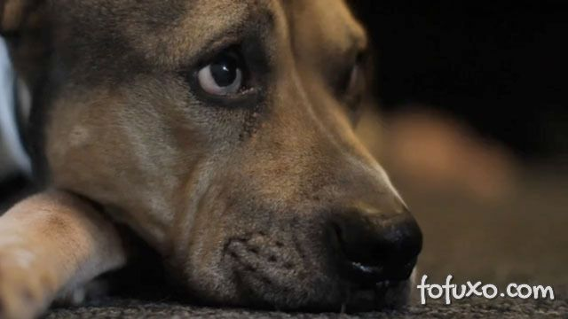 Vídeo emocionante mostra os últimos minutos de cão com câncer terminal