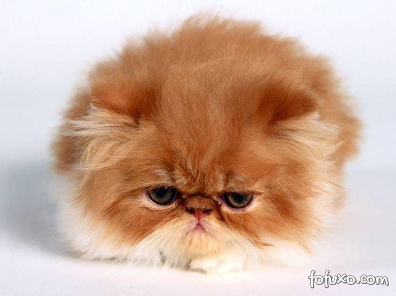 O que acontece com um gato no chão encerado? Descubra neste vídeo!
