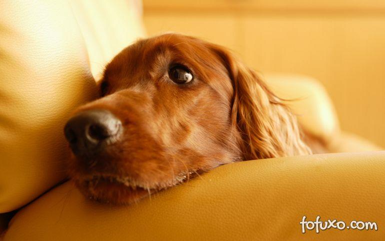 Veja cão de terapia confortando paciente em estado terminal