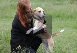 Cachorra auxilia dona durante ataques epiléticos