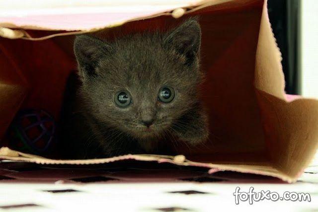 Saiba o que este gato encontrou dentro desta sacola de papel