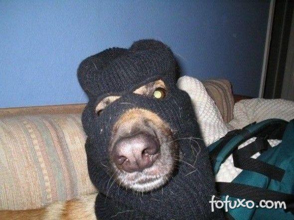 Cachorro é flagrado roubando padaria