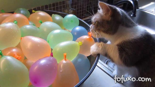 O que a curiosidade faz com o gato?