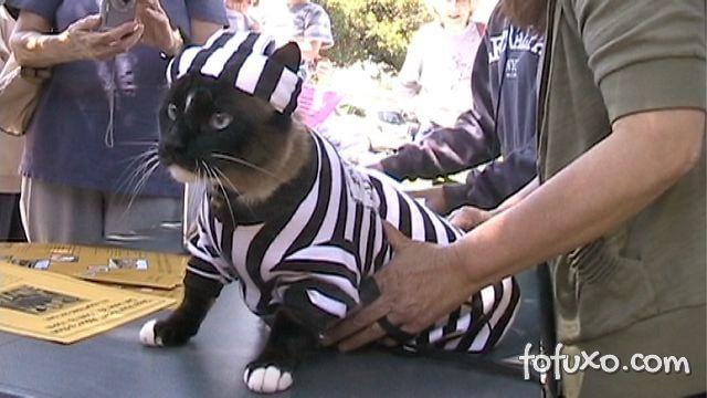 Conheça o gato que já roubou mais de 600 objetos dos vizinhos