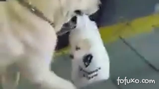 Cachorro carrega filhote dentro da sacola