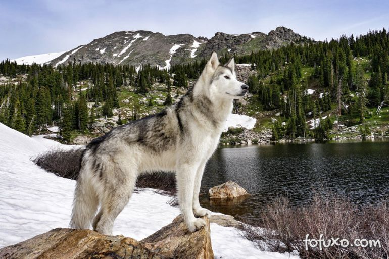 Cão acompanha dono nas mais incríveis aventuras