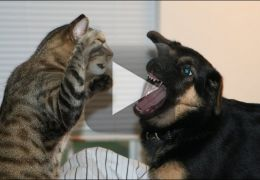 "Gato manda cachorro ""calar a boca"""