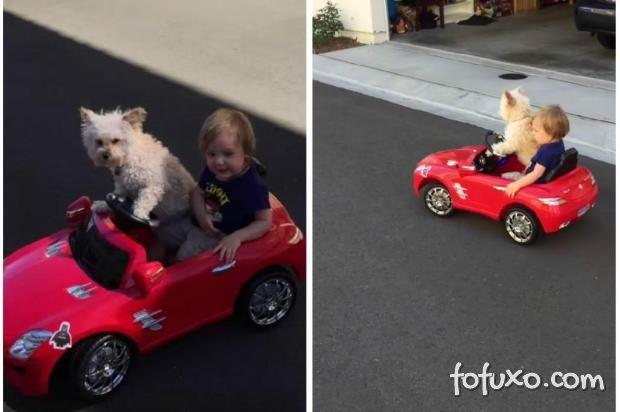 Cachorro leva criança para passear em carrinho de brinquedo