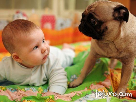 Cachorro cria plano para tirar algo da criança