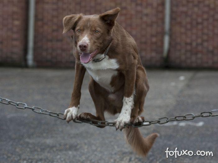 Cachorro acrobata vira sucesso na web