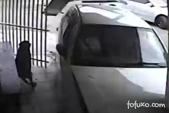 Imagens flagram cachorro quase sendo atropelado