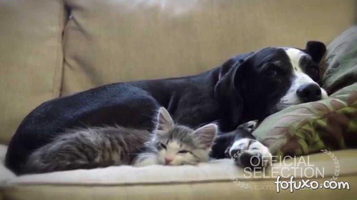 Vídeo retrata amizade entre um gato adotado e um cachorro