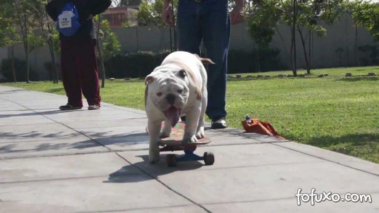Cachorro Skatista entre no Livro dos Recordes
