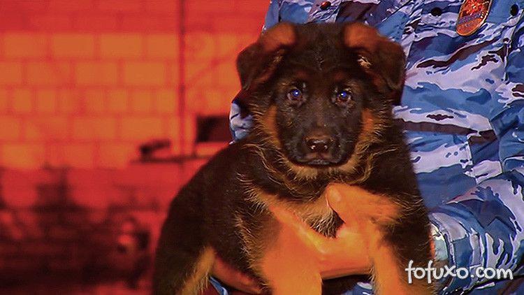 Rússia doa cachorro para França depois dos atentados