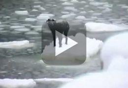 Confira vídeo que mostra cão sendo resgatado de pedaço de gelo