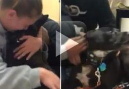 Vídeo mostra reencontro emocionante de mulher com seu cachorro perdido