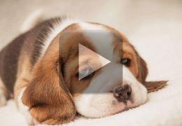 Cachorro enterra próprio filhote morto