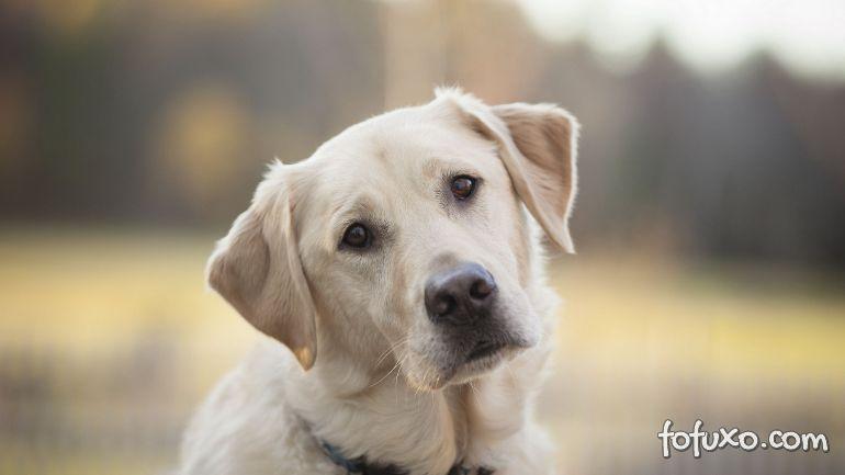 Labrador arranja maneira inusitada de descer as escadas