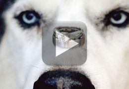 Homem pede namorada em casamento através de um cachorro