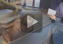 Assista a incrível reação de um macaco quando ele vê um truque de mágica