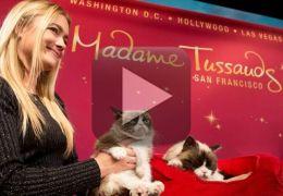 Gato mal-humorado ganha estátua no Madame Tussauds