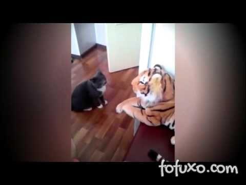 Conheça o gato que odeia o tigre