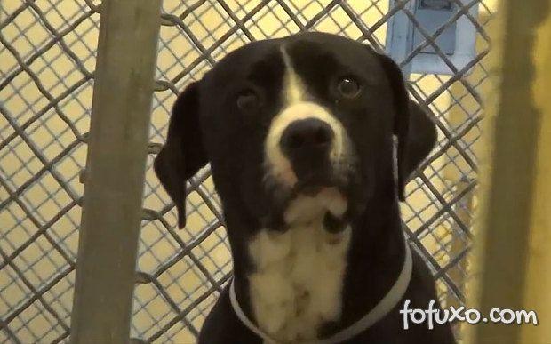 Confira a reação de um cão depois que ele é adotado