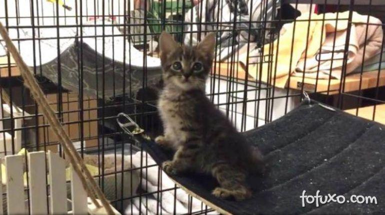 Comunidade se mobiliza para salvar gato preso em encanamento