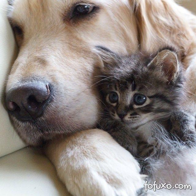 Vídeo mostra gato apresentando filhotes para cão
