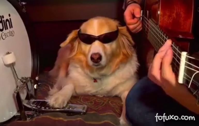Cão toca música do Arctic Monkeys na bateria