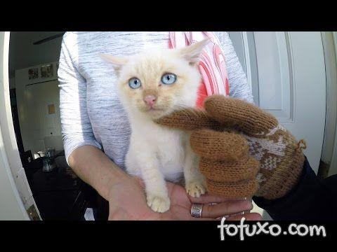 """Confira a emocionante história de resgate do gatinho """"Olaf"""""""