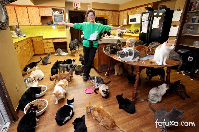 Saiba como é viver em uma casa com 1100 gatos